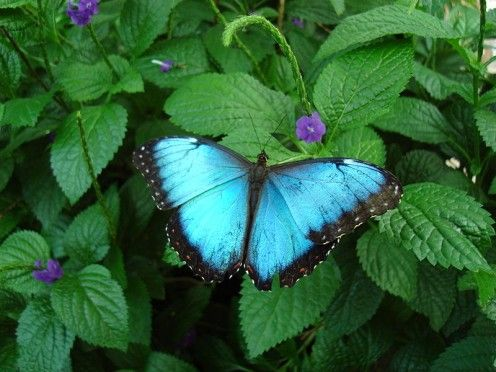 Butterfly Conservatory, Niagra Falls, Ontario, Canada...beautiful.