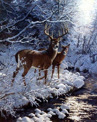 Animaux : Cerf et biche sous la neige, prêt d'un lac geler