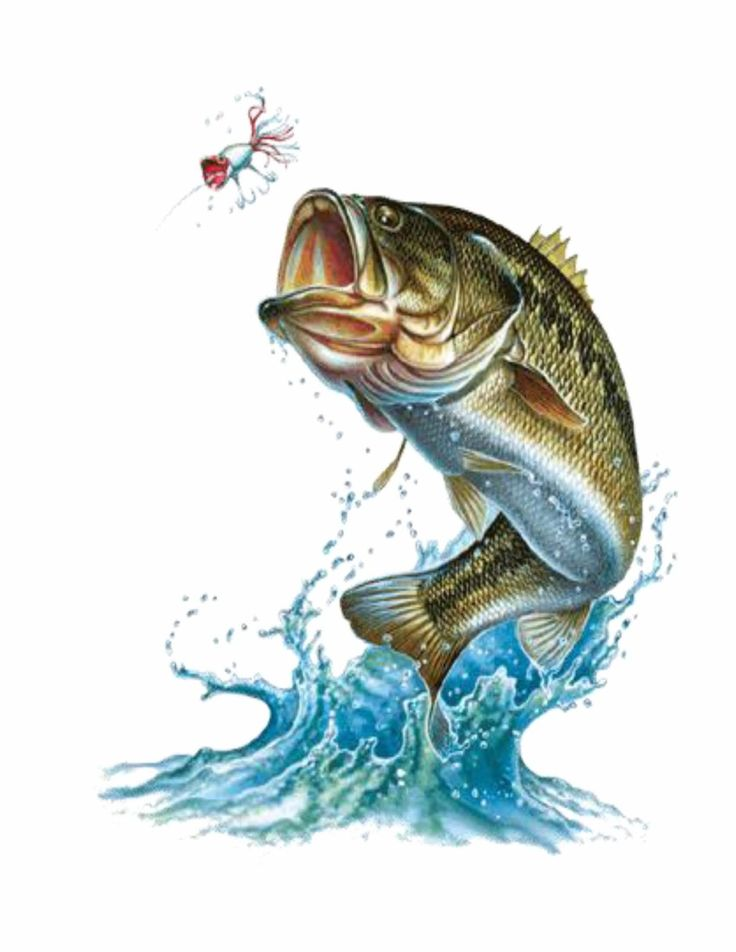 35 best Bass fishing images on Pinterest