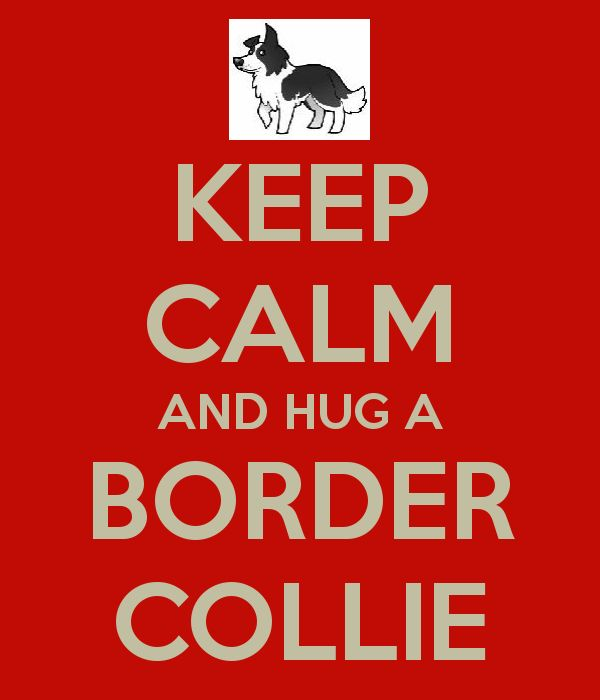 dont really like these keep calm posters but it said border collie on it....