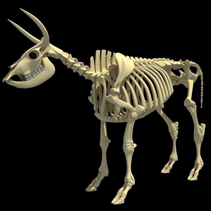 скелет быка картинки