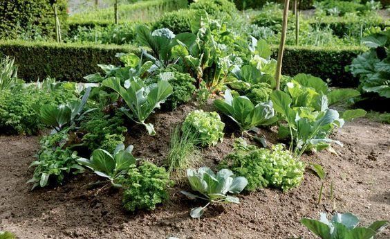 Ein Hügelbeet besteht aus mehreren Schichten organischen Materials. Gemüse lässt sich hier gut kultivieren, da bei der Zersetzung Wärme frei wird, die das Pflanzenwachstum fördert. So können Sie sich ein eigenes Hügelbeet anlegen