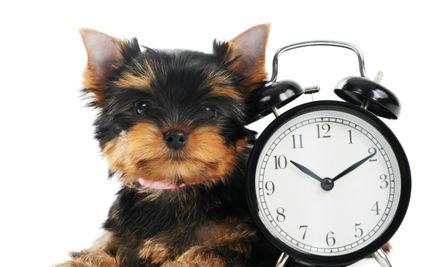 What Dogs Teach Us About Time