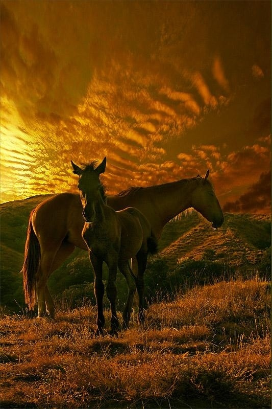 Horses at sunset - Those golden clouds are beautiful....