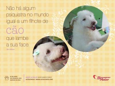 Dia 4 de abril, Dia Mundial dos Animais de Rua!!    Não há algum psiquiatra no mundo igual a um filhote de cão que lambe sua face.     Conheça mais sobre o trabalho do Acãochego,  Acesse: www.acaochego.org.br    #AdoteNaoCompre #Animais #ApadrinheUmAnimal #Animais