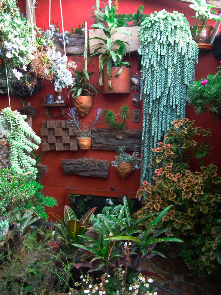 Jardín interior succulent garden