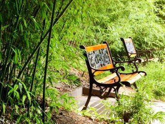 Mrozoodporne bambusy do ogrodu