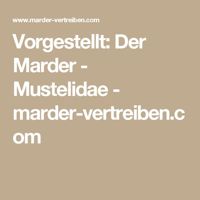 Vorgestellt: Der Marder - Mustelidae - marder-vertreiben.com