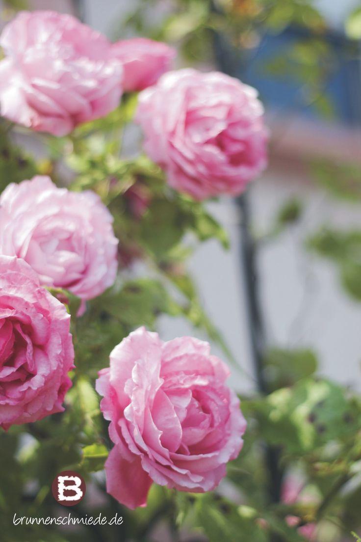 36 best Wohnen & Garten images on Pinterest