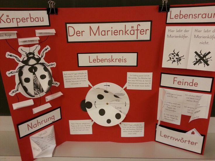 Lapbook - Marienkäfer