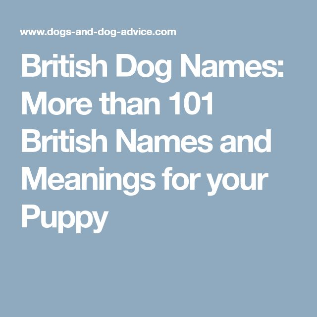 British Dog Names: More than 101 British Names and Meanings for your Puppy