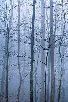 Forest Fog Great Smokies National Park, TN   David Cobb