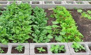 Making a Cinder Block Raised Bed Garden