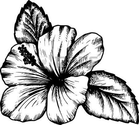 Les 25 meilleures id es de la cat gorie dessin hibiscus sur pinterest tatouages de fleurs d - Dessin hibiscus ...