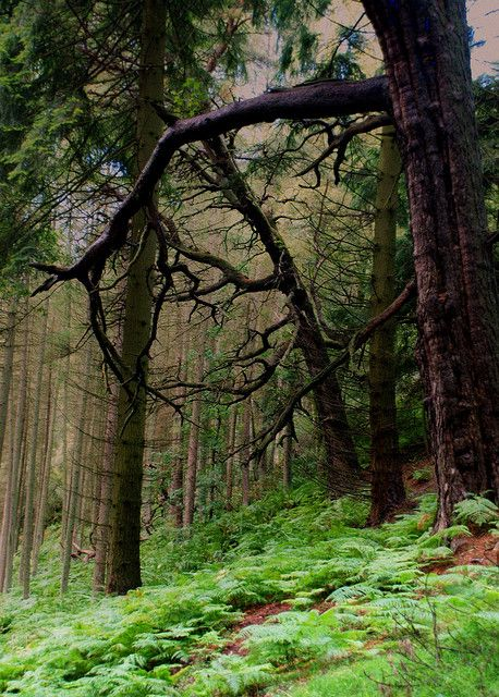 Clinging Branches ~ Queen Elizabeth Forest Park, Scotland.