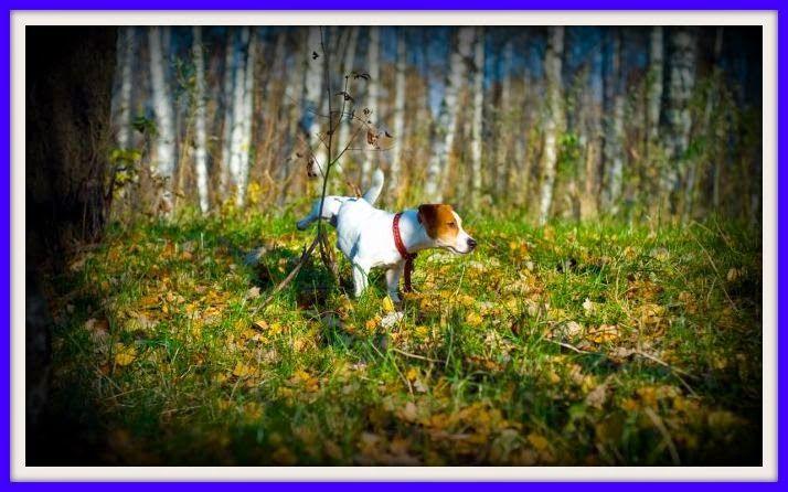 BRICOMANIACOS: Cómo evitar que tu perro marque en casa.