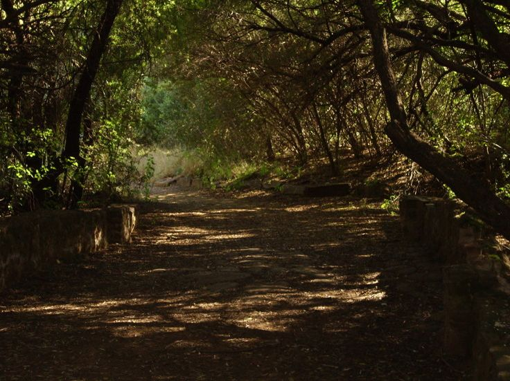 Bloemfontein Botanical Gardens.  Photograph by Edwin Hawthorn