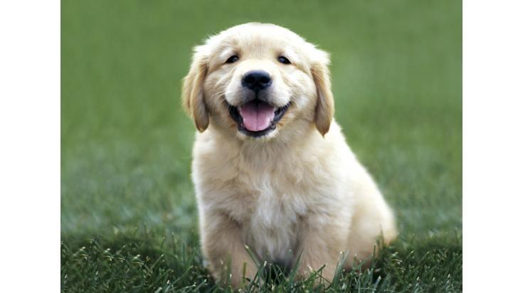 Cuidado de mascotas/paseo de perros