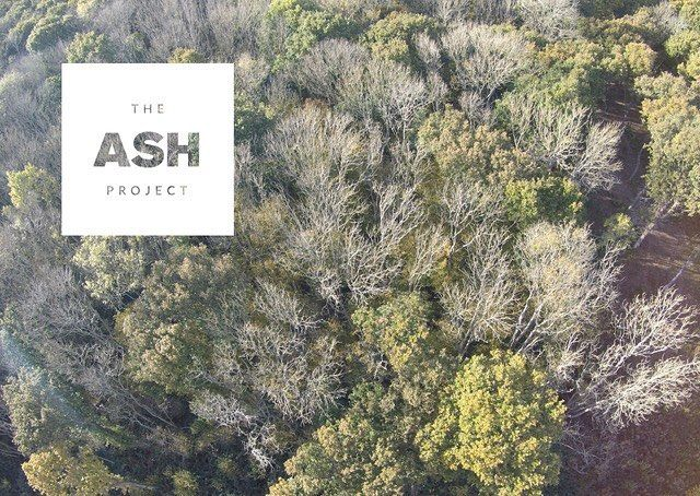 We are proud to be supporting this cultural response to the problem of Ash Dieback #TheAshProject #design #trees #kent #ash