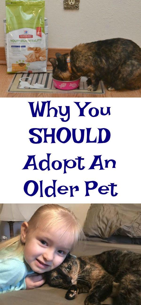 Senior Cats, older cats, adoption older cats, caring for senior cats, food for senior cats, aging cat, adopting a cat, Adopt a Senior Pet Month #HillsTransformingLives #ad