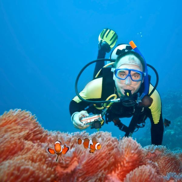 12 Best Live To Dive Images On Pinterest Snorkeling Diving And