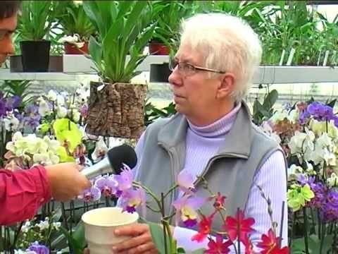 25+ Best Ideas About Orchideen Richtig Pflegen On Pinterest ... Oleander Als Zimmerpflanze Richtig Pflegen