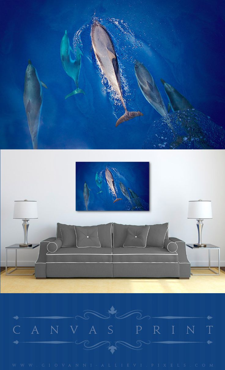 A print of a school of Stenella Coeruleoalba dolphins in the Mediterranean sea, Italy. These playful mammals love to approach boats and play along with the waves. #homedecor #wallart #walldecor #canvasprint #dolphins #kidsroom #seacreatures #sealife #dolphin
