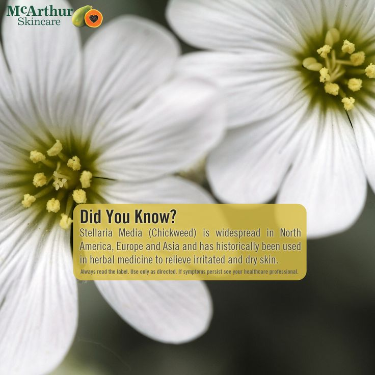 Did You Know? Chickweed...  Stellaria Media (Chickweed) is widespread in North America, Europe and Asia and has historically been used in herbal medicine to relieve irritated and dry skin.  Our Therapeutic range of products are listed on the Australian Register of Therapeutic Goods and each contain high concentrations of natural active ingredients traditionally used in herbal medicine including; Aloe Vera, Chickweed, Arnica and Chamomile.   Visit our website at mcarthurskincare.com for…