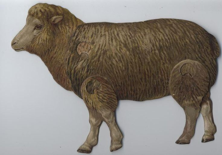 THE SHEEP (OVIS ARIES). FATHER TUCK'S MECHANICAL ANIMALS.