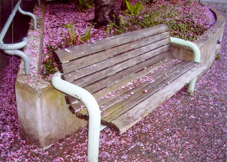 Typical Vancouver spring time scene.