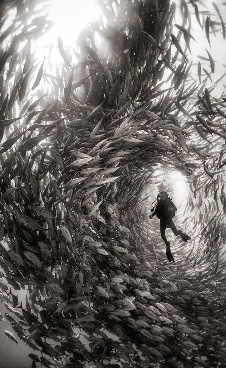 Alice Photo by Anuar Patjane — National Geographic Your Shot