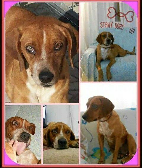 ΥΙΟΘΕΤΗΘΗΚΕ Λίζα η πιο ηρεμη σκυλιτσα κατάλληλη για οικογενεια και για μεσα στο σπιτι 6973339612