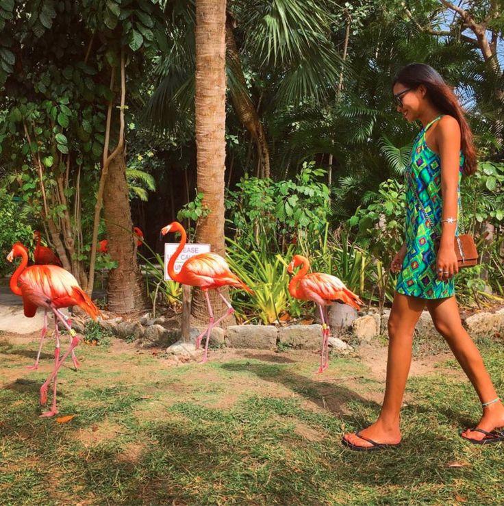 Walk like a flamingo at Ardastra Gardens, Zoo and Conservation Centre! Photo: viottttttta http://bit.ly/1D1gf3r