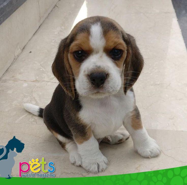 Feliz ombligo de semana 🌞  #PetsWorldMagazine #RevistaDeMascotas #Panama #Mascotas #MascotasPanama #MascotasPty #PetsMagazine #MascotasAdorables #Perros #PerrosPty #PerrosPanama #Pets #PetsLovers #Dogs #DogLovers #DogOfTheDay #PicOfTheDay #Cute #SuperTiernos