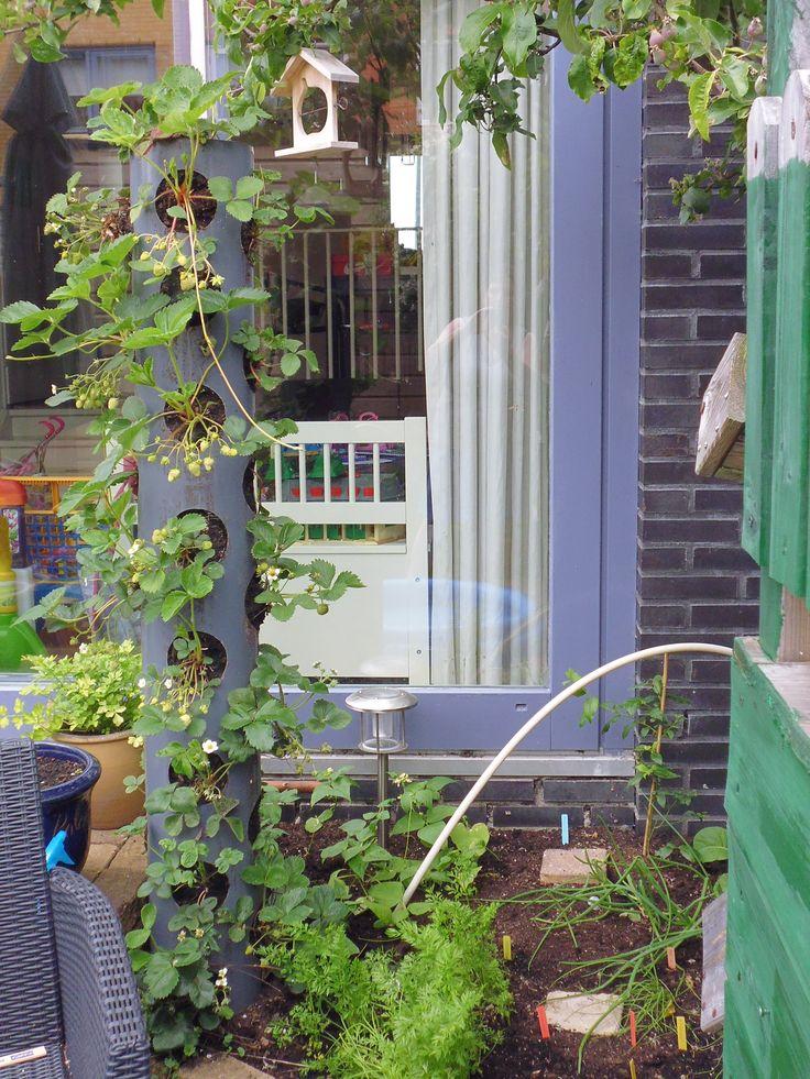 21-5-2014 De aardbeitoren, sperzieboontjes, worteltjes, uitjes en mijn blauwe bessen struikje.