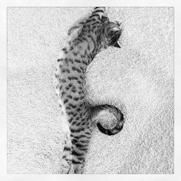 Oskar the blind kitty