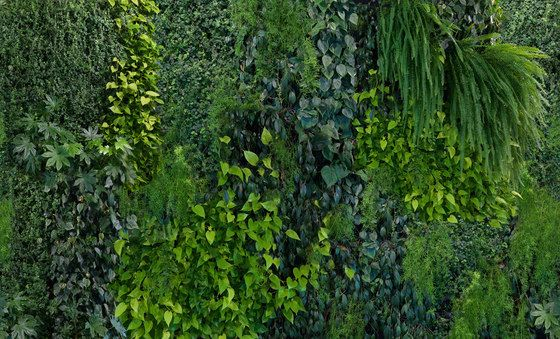 Captured Reality by Mr Perswall   Green Wall   Natural Bamboo ..