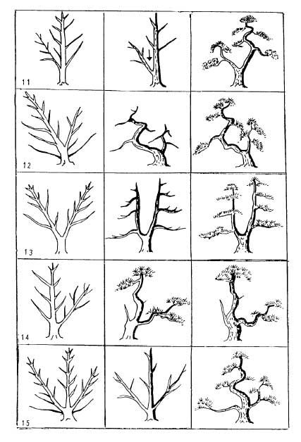 Examples of Styling Miniature Bonsai (11-15) good if there's multiple trunks