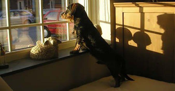 Les choses surprenantes sur l'aboiement du chien ! #Woufbox #Animalblog