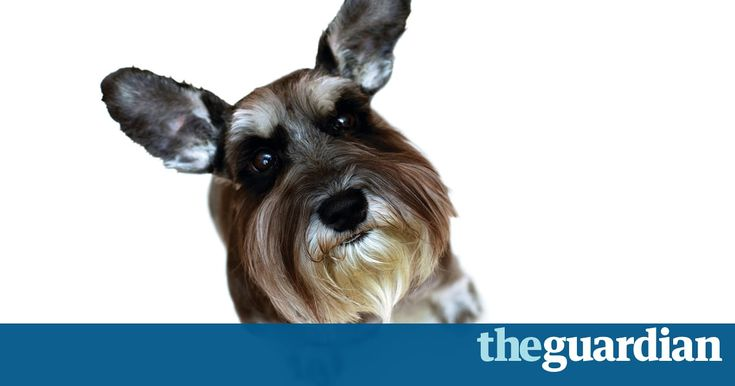Should We Stop Having Pets? Herewith What Ethicists Say