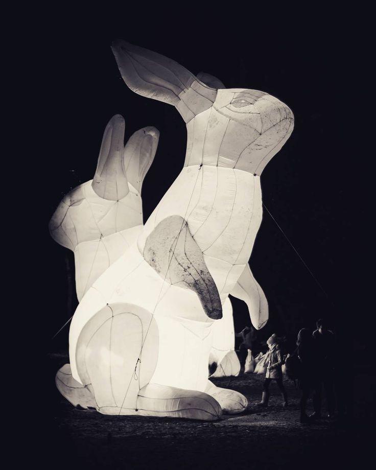 Have you been to #UTG to see the bunnies?  #AberdeenAdored #Team30se #visitscotland #tw #fb #seeninthedeen #beautifulaberdeen #nightphotography #nightphotography  Photographer: @notnixon