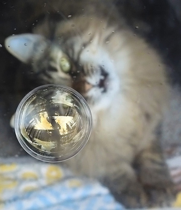 Tom Falconer- Bubble Photography  Bubba with Bubble