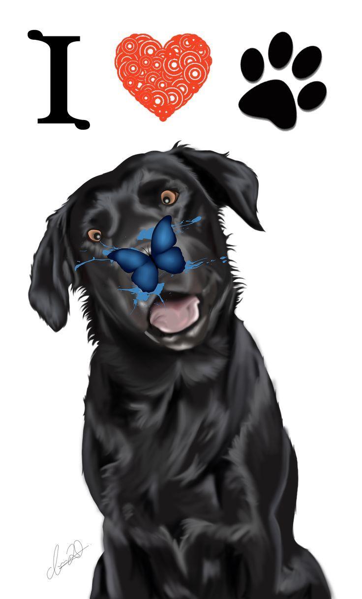 Labrador Welpen Kaufen Spielen Die Fellfarben Eine