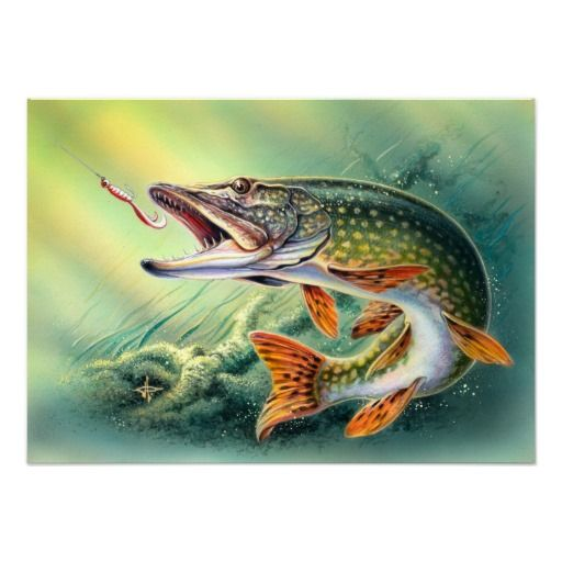 126 best images about streamers pike musky on pinterest for Pike ice fishing lures