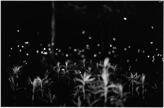 "Gregory Crewdson ""Fireflies"""