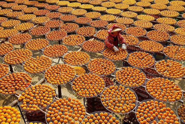 orange! persimmon fruit drying in the sun
