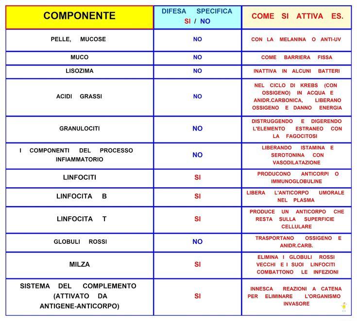 Mappa Concettuale: Le difese dell'organismo #scuola #appunti