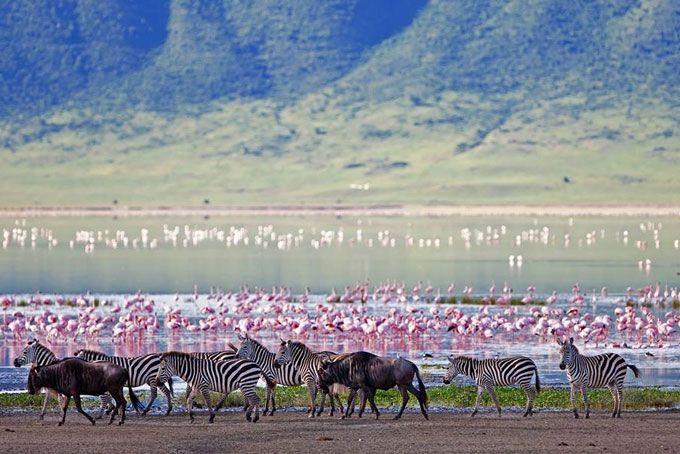 Tanzania. Ngorongoro crater
