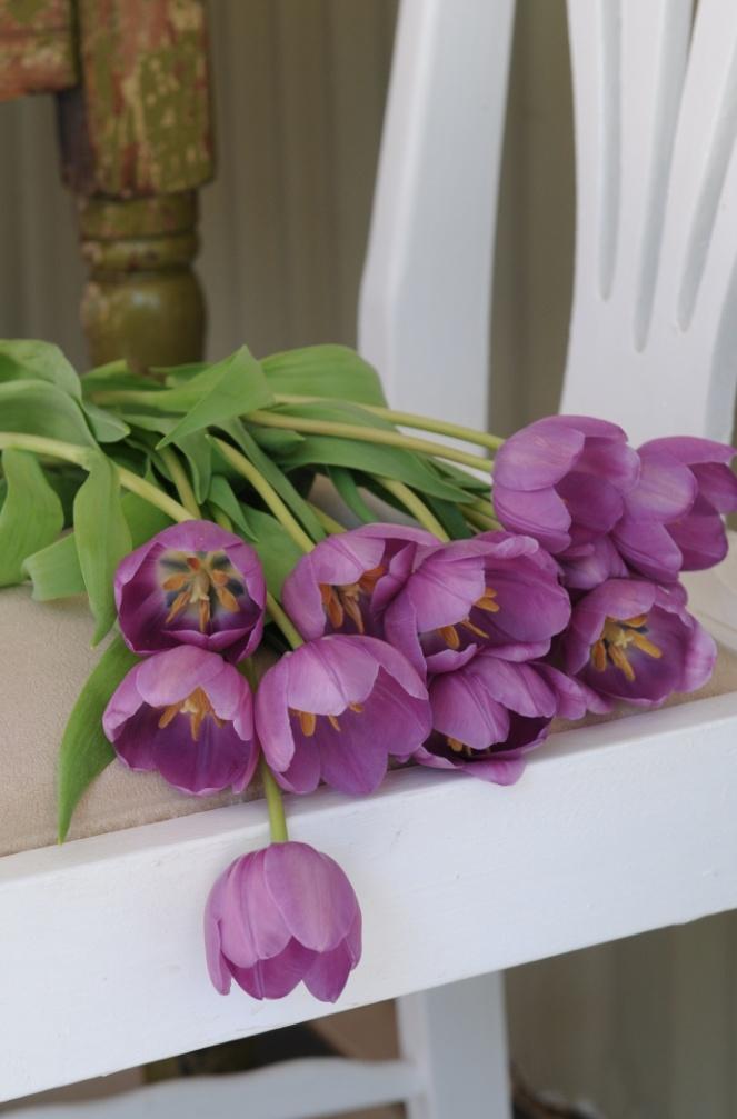 Tulips ...