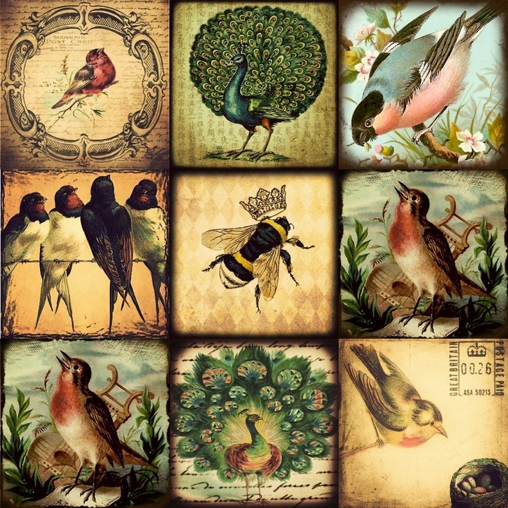 Vintage Birds and Bugs 1x1 inchies digital collage sheet NO.7 perfect for…